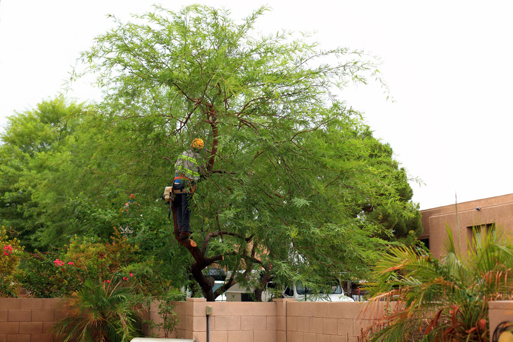 Tree Services - Scottsdale Landscaping Services